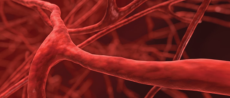 Image of human blood vessels